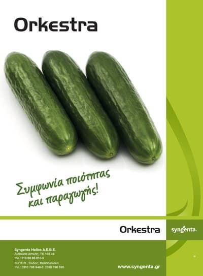 Αγγούρι Orkestra | φακ. 500 σπόρων