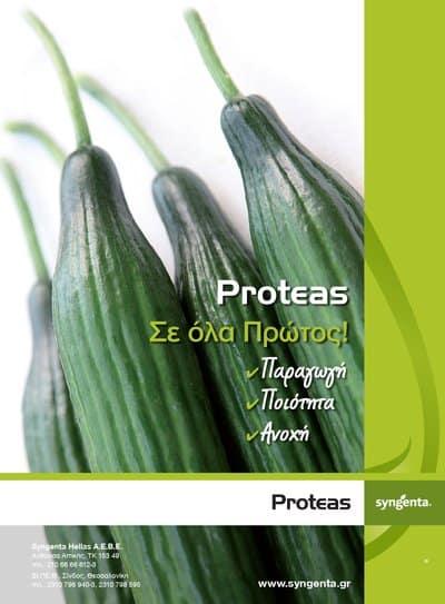 Αγγούρι Proteas | φακ. 100 σπόρων