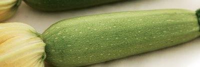 Κολοκύθι Otto | φακ. 1000 σπόρων