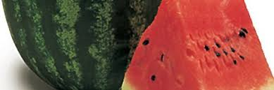 Καρπούζι Candice | φακ. 1000 σπόρων