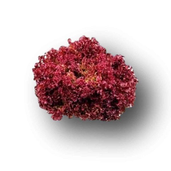 Μαρούλι Τύπου Oak Leaf Miel κόκκινο   κονσέρβα 5000 pills
