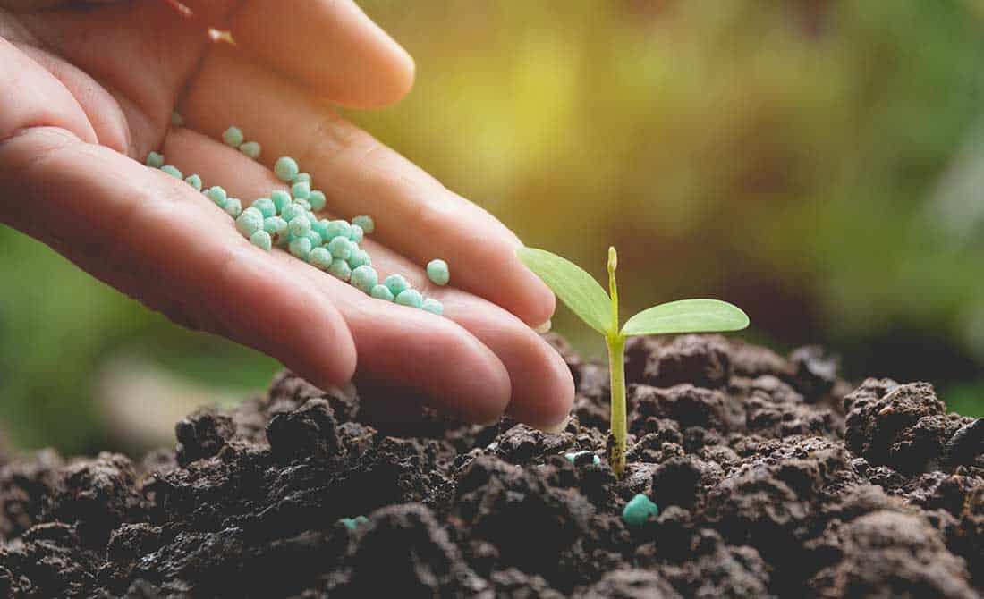 Χέρι εφαρμόζει κοκκώδες λίπασμα στο χώμα σε νεαρό φυτό