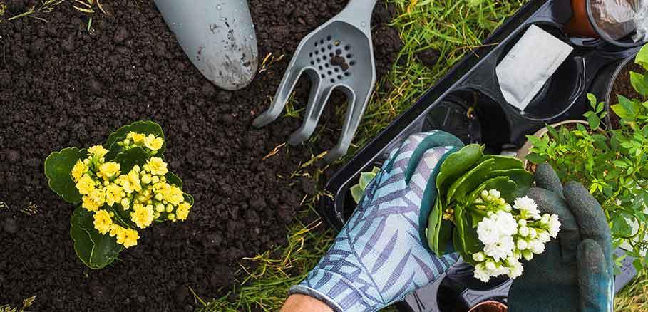 Χέρια άντρα φυτεύουν γλαστράκι σε παρτέρι που έχει σκάψει με εργαλεία κηπουρικής