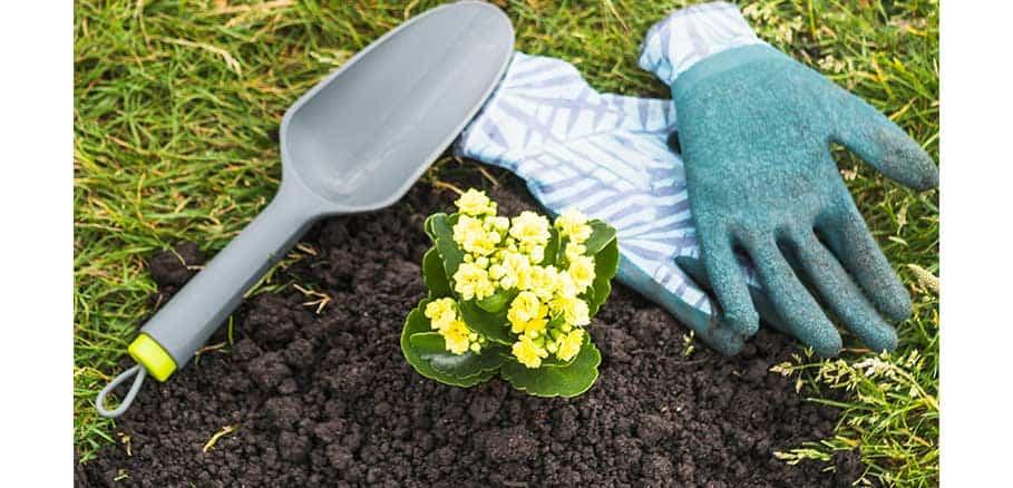 Φυτεμένο κίτρινο λουλούδι και δίπλα του γάντια και σπάτουλα. Βασικά εργαλεία κηπουρικής